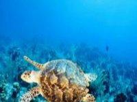 Marine fauna