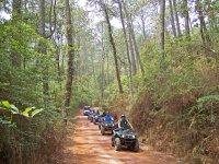 bosque de tapalpa