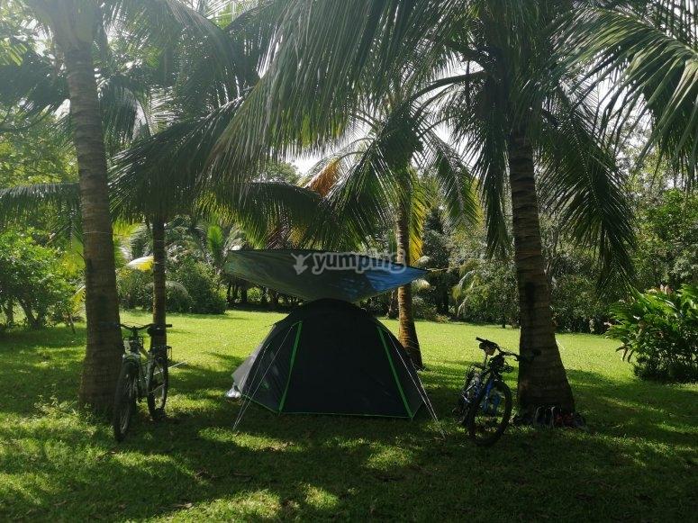 Enjoy the rich climate of Veracruz