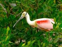 we observe many exotic birds