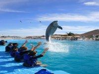 Conociendo al delfin
