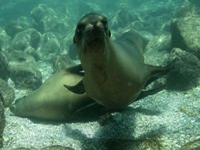 Snorkel tour in Cabo Pulmo Park