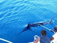 Marlin en el agua