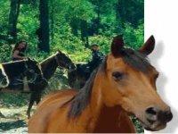 Rutas a caballo por los bosques