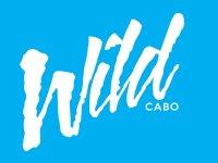 Wild Cabo Tours Paseos en Barco