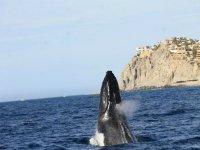 Espectaculo del Mar de Cortes