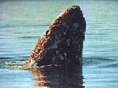 Baja Seafaris Whale Watching