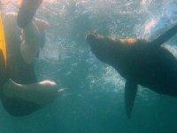 Leones marinos bajo la superficie