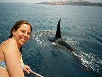 Orcas en el mar