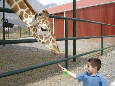 Paquete fiesta con hot dog y visita al zoológico