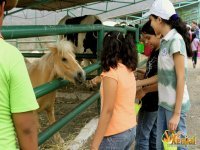 Party package with hamburger + park tour
