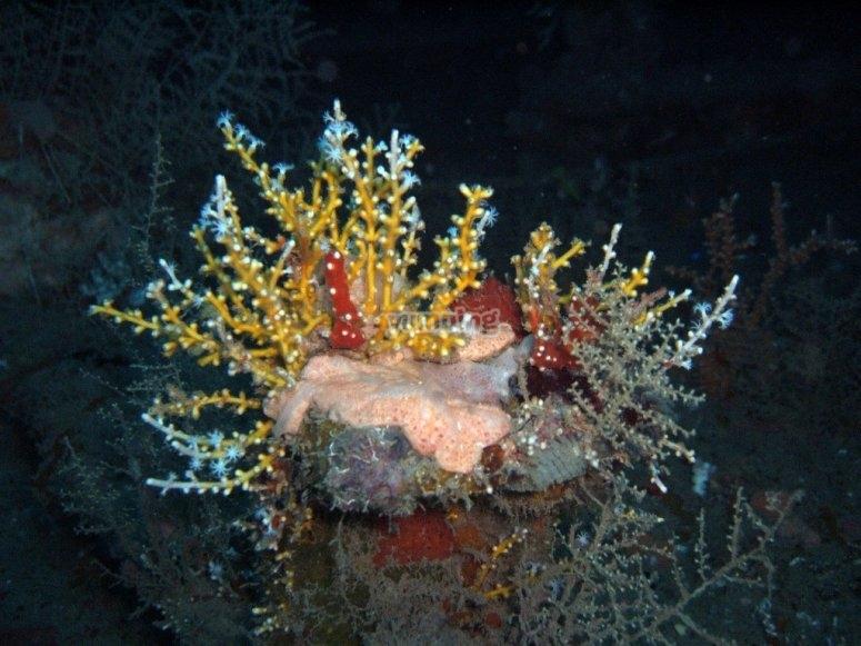 Diving in Anton, coral reefs.
