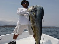 fish of huatulco