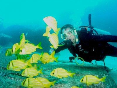 Amigos del Mar