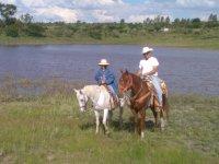 Camp's horses