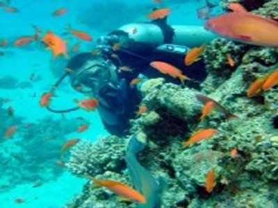 Mexico Adventure Guides Buceo