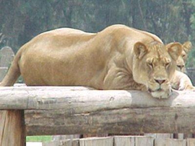 Zoológico San Juan de Aragón