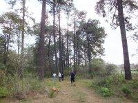 Caminatas en el bosque