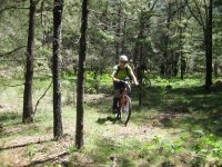 Pedaling through the pines