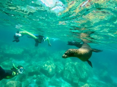 Cabo Expeditions Snorkel