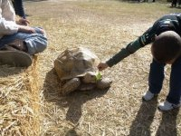 Niño cpon tortuga