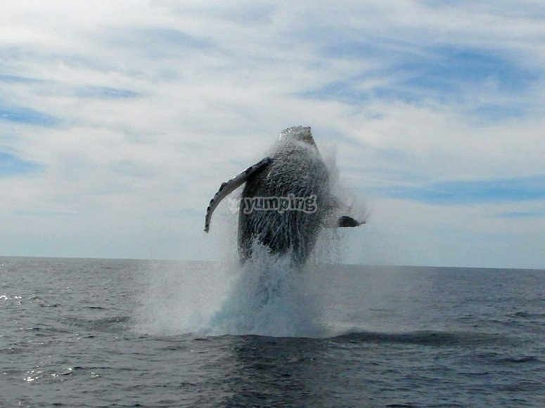 Tours  whale watching