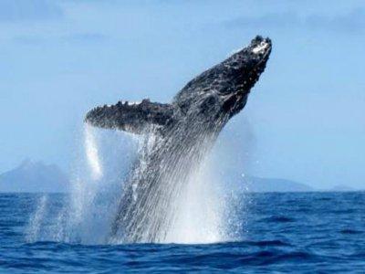 Avistamiento de ballenas en Cabo San Lucas 2 horas