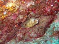 anguila de mar