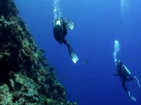 Become a diving professional