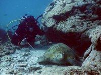 Discover marine beauty
