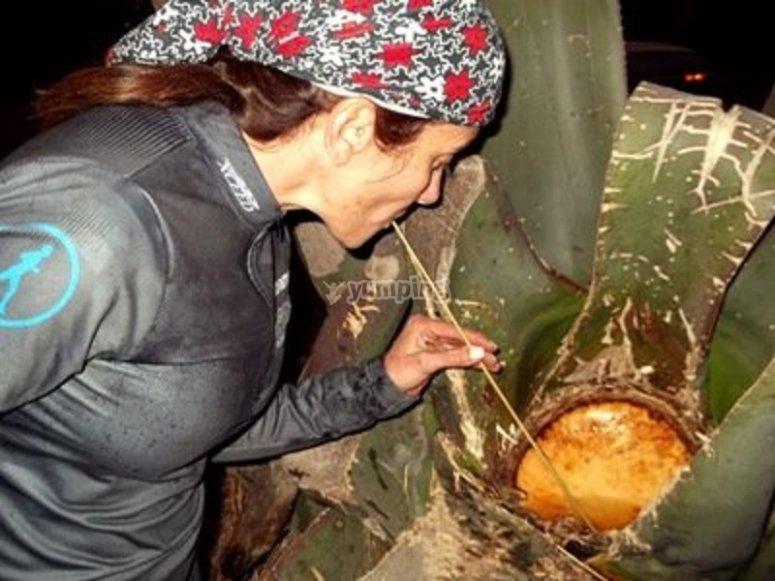 Pulque artesanal