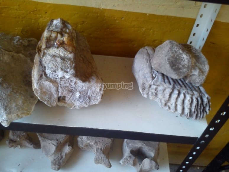 Fossils in the museum