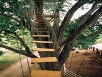 Rutas de árboles