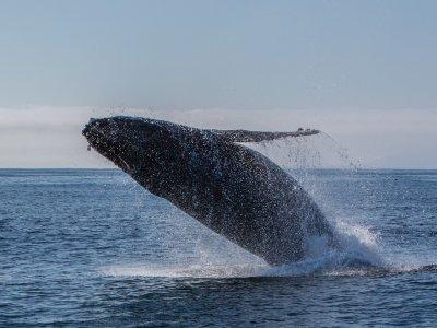 ToursTijuana Whale Watching