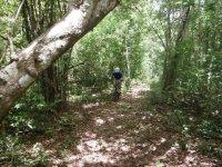 los mejores trails