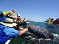 contacto con ballenas