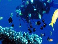reef diving