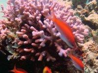 marine faunia