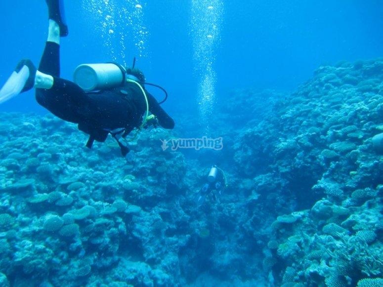 Bucea en arrecifes