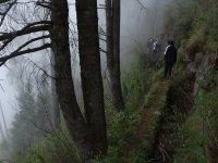 Pasando la neblina del camino