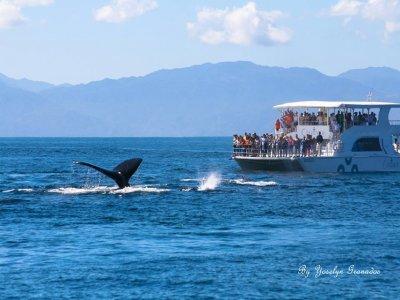Avistamiento de ballenas en Puerto Vallarta 4 hrs
