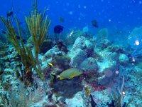 Descubre la belleza de la vida marina