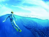 Discover marine animals with snorkeling
