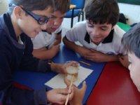 Aprendiendo de componentes fisicos y quimicos