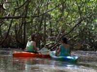 Kayaks in the mangrove