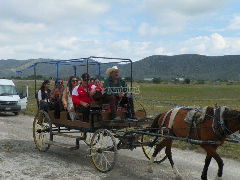 Calandria journey