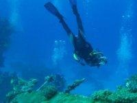 Conoce la flora y fauna marítima