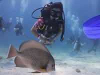 dive in quintana roo