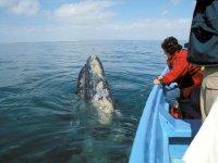 Excursion para ver ballenas