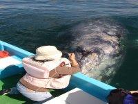 Conociendo a las ballenas en vivo
